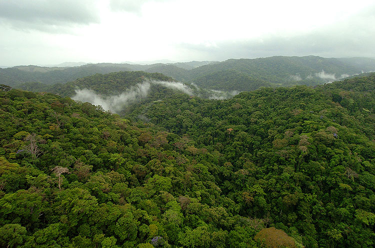 Panama Rainforest 1