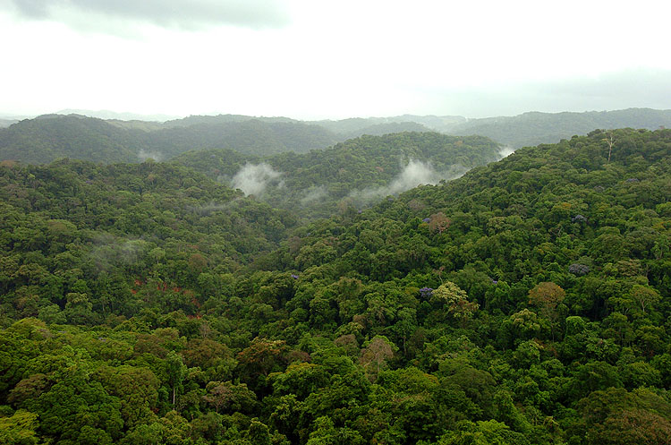 Panama Rainforest Chagres 1