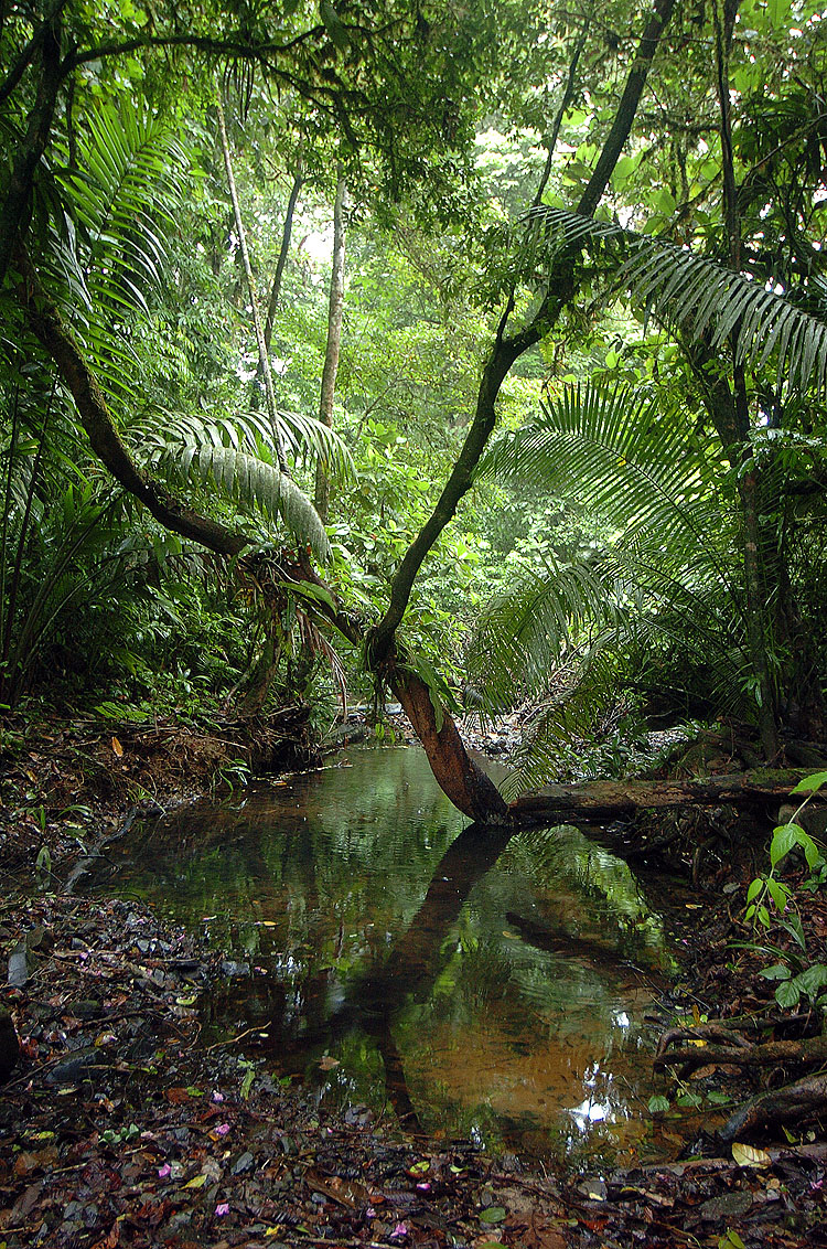 Panama Rainforest Stream Bed
